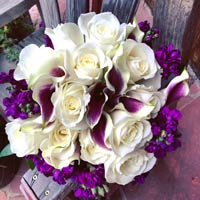 Picassa Calla Lilies, Tibet Roses and Purple Stock